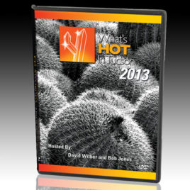 What's Hot In Tucson: 2013 DVD